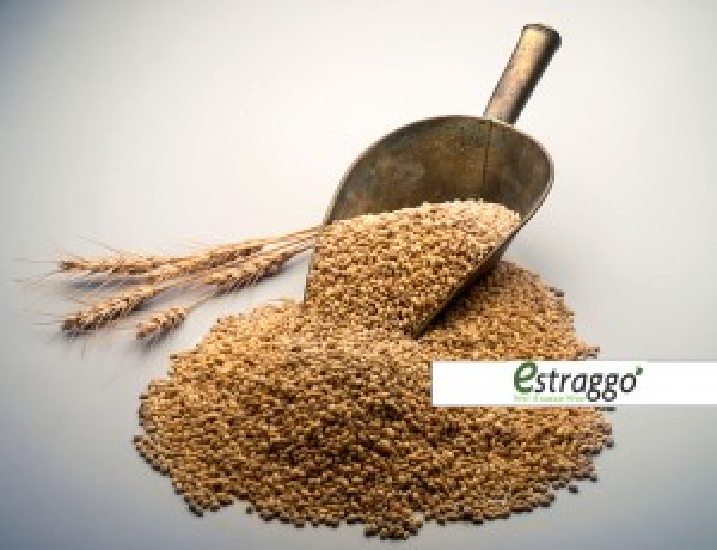 Semi di grano (5kg)